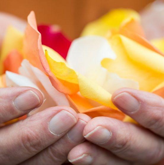 Blog-Header-Hands-Petals (1)